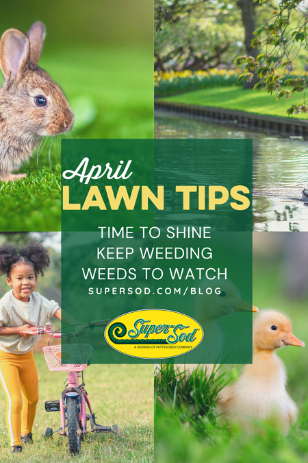 April 2021 Lawn Tips Graphic