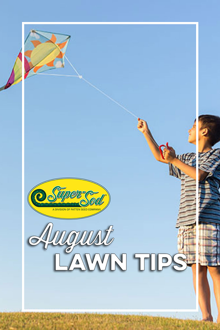 August-Lawn-Tips-Pinterest-Pin