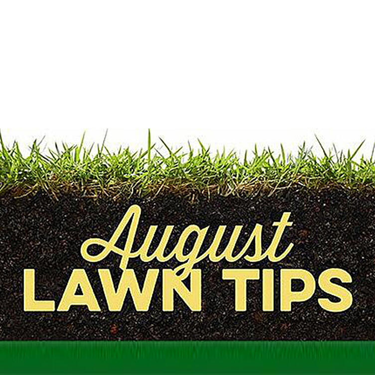 August Lawn Tips 2019