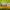 August Lawn Tips 2020 - featured image