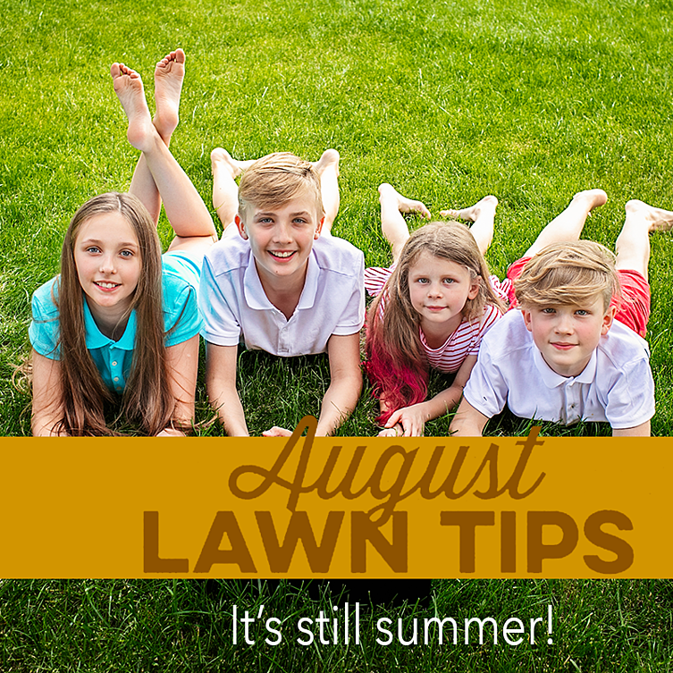 August Lawn Tips 2020