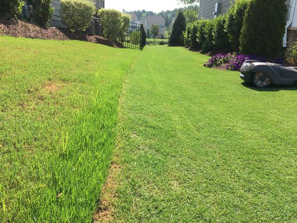 grass maintained by robotic mower side-by-side with traditional mowed grass