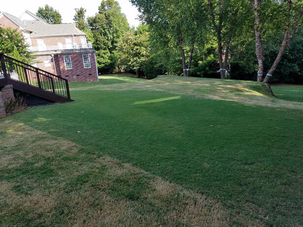 TifGrand lawn after it was scalped by the landscaper.  The green area is the section that was maintained by a robot lawn mower.  This illustrates the benefits of frequent mowing, especially on bermuda - small.jpg