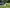 What's the Best Lawn for Growing Near a Pool? - featured image