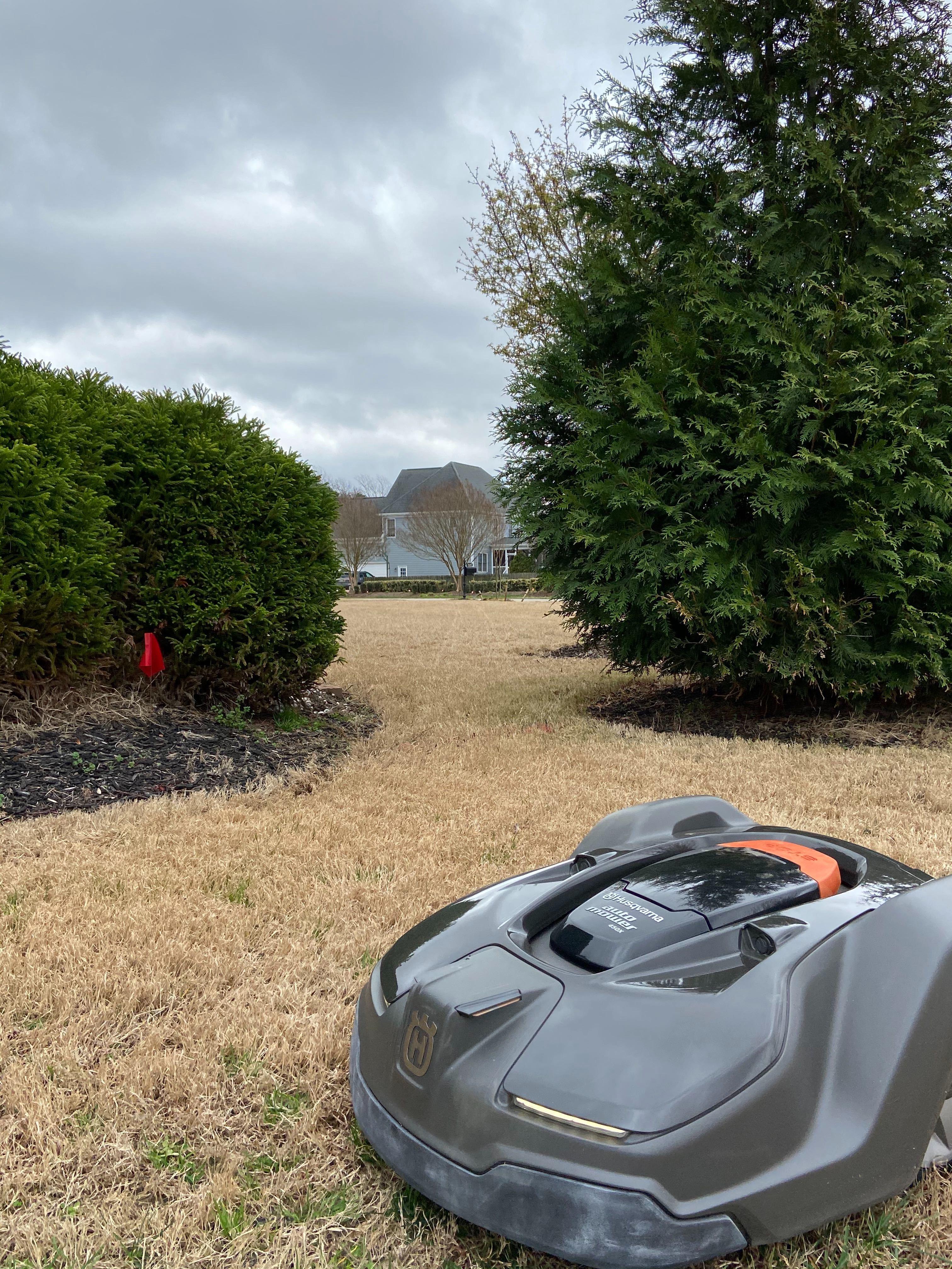 robotic lawn mower on dormant warm season lawn2