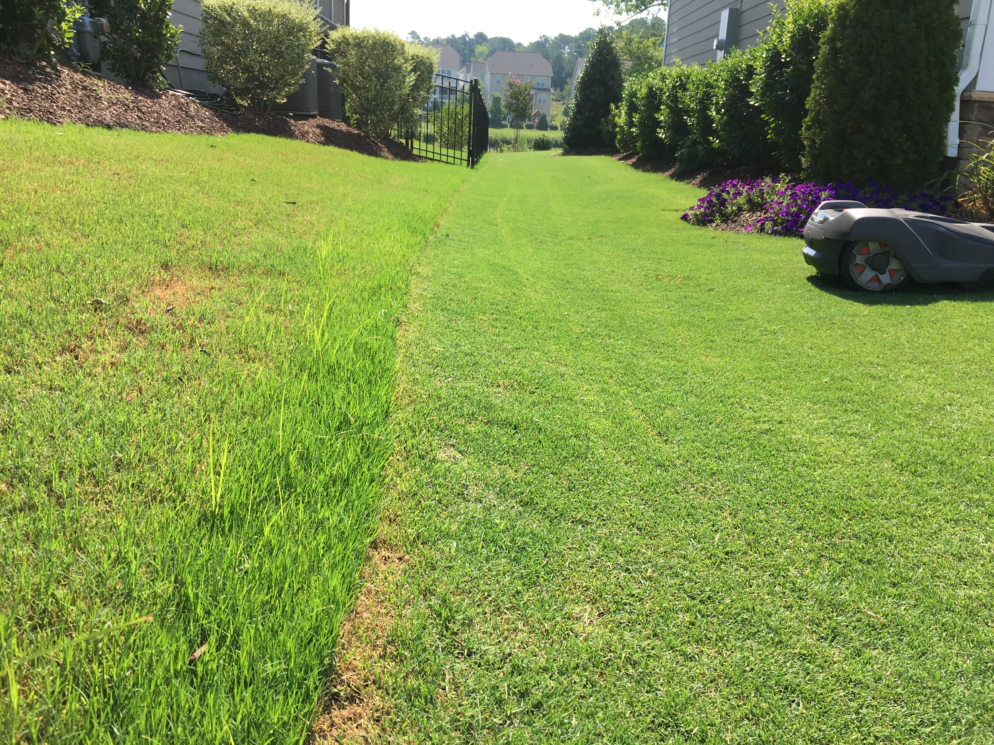 rotary mower comparison with robotic mower on Bermudagrass