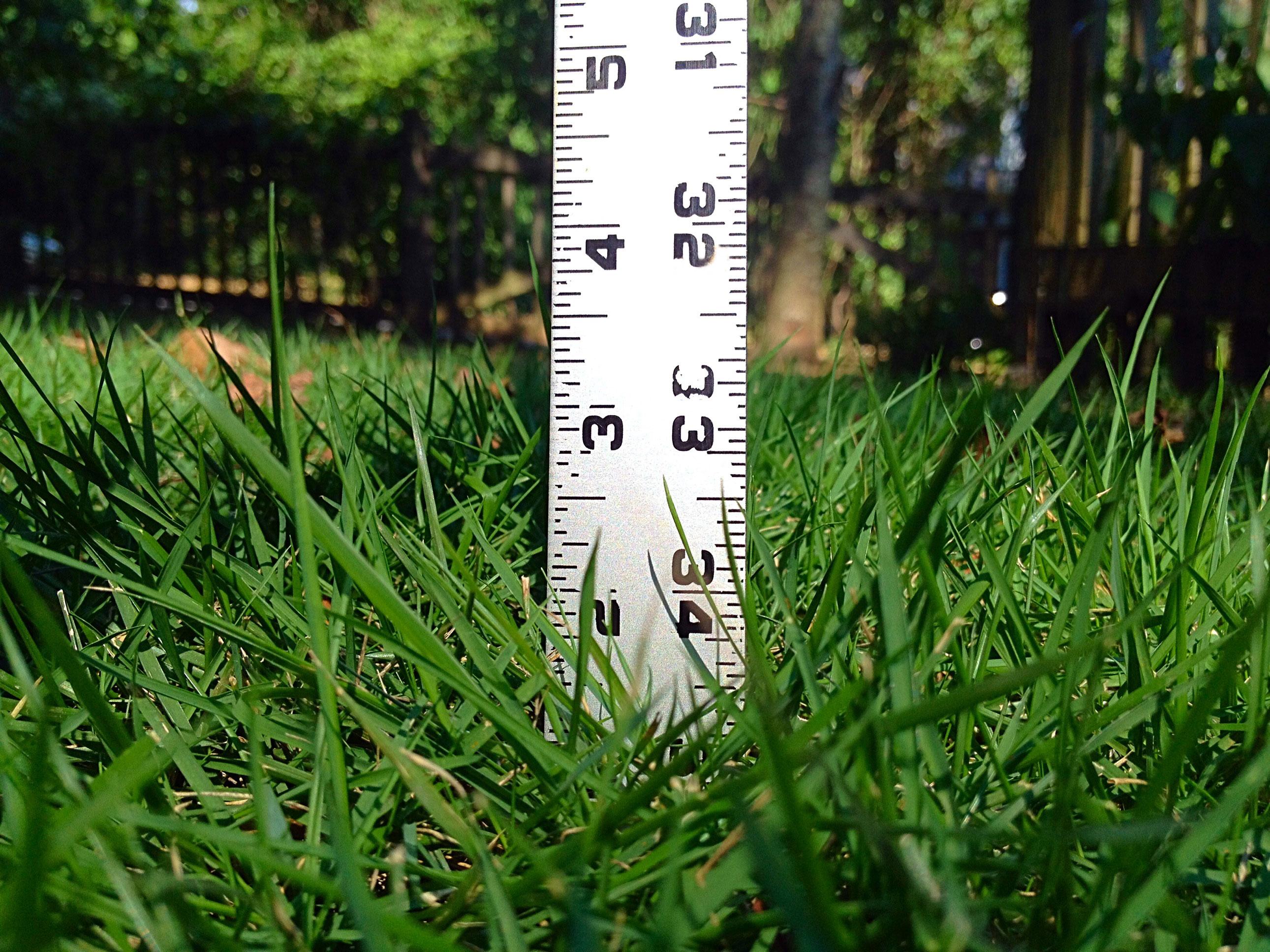 grass height ruler mow height.jpg