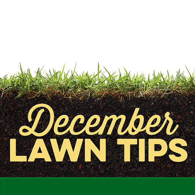 December Lawn Tips 2019 - featured image