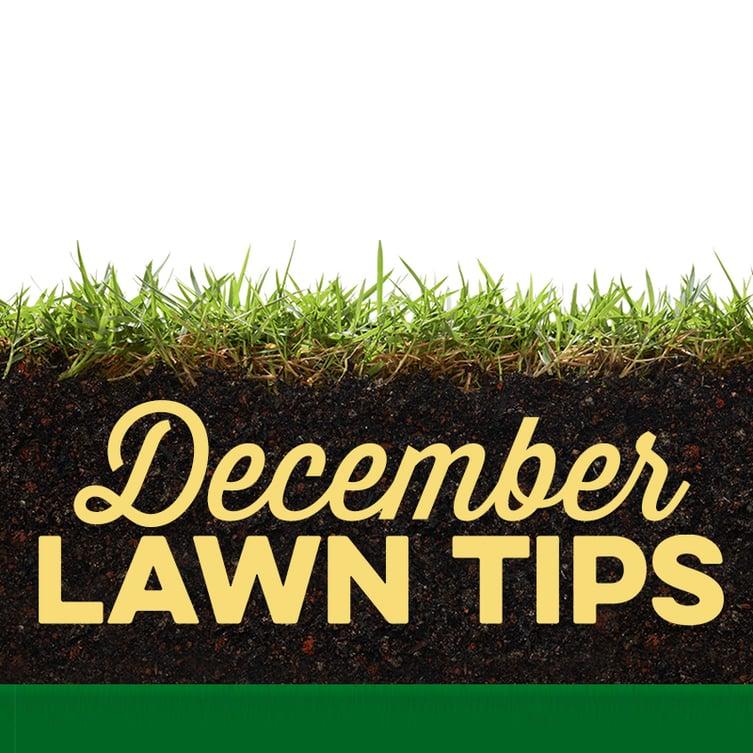 December Lawn Tips 2019