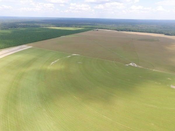 Patten Seed Field