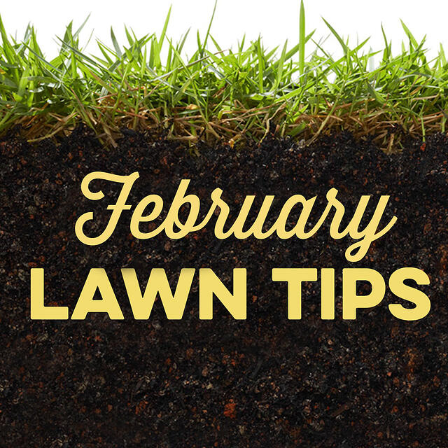 February Lawn Tips 2020 - featured image