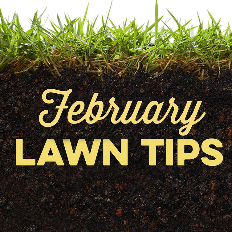 February Lawn Tips 2020