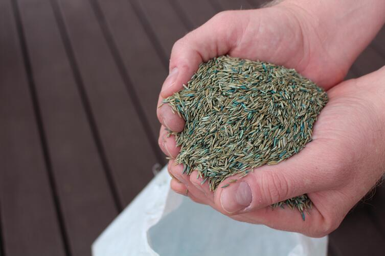 Qualities to Look for when Buying Fescue Seed