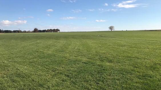Laurinburg fescue for spring harvest-759080-edited