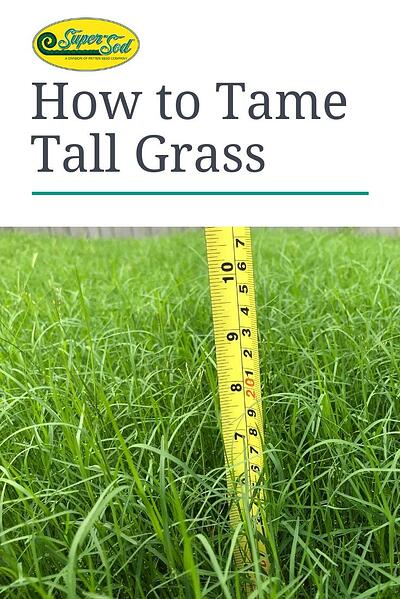 How to Tame Tall Grass-1