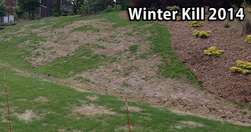 Winter Kill 2014 of Warm Season Lawns