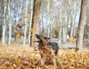 October Lawn Tips