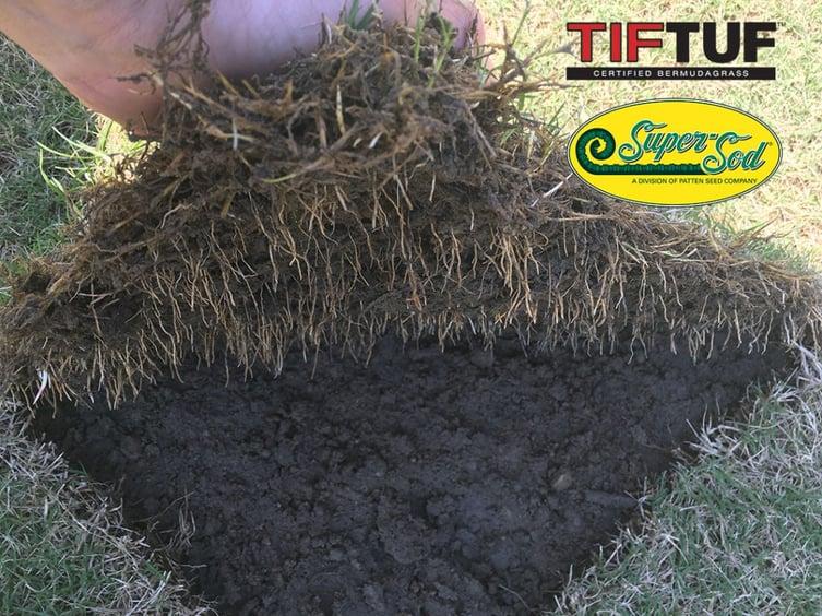 TifTuf Bermuda Roots