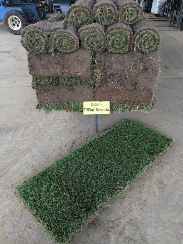 Individual Sod Rolls for Quick Fixes