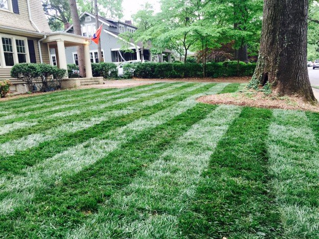Apply Lawn Fungicide to Tall Fescue in Summer