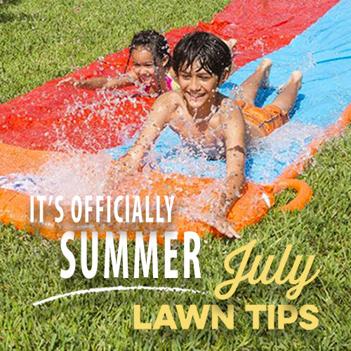July Lawn Tips 2020