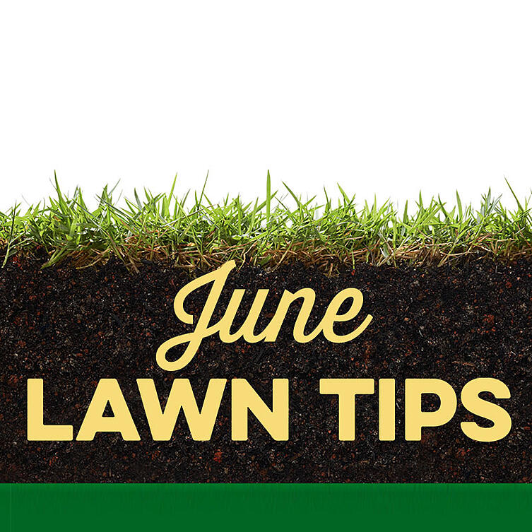 June Lawn Tips 2020