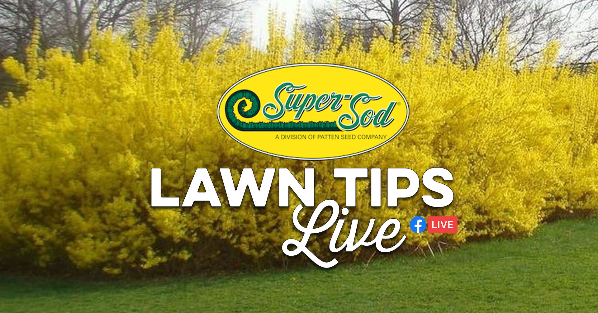 Lawn_Tips_Live_February2021