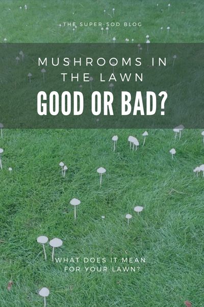MUSHROOMS IN THE LAWN - good or bad?