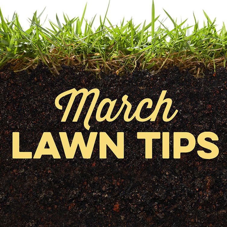 March Lawn Tips 2020