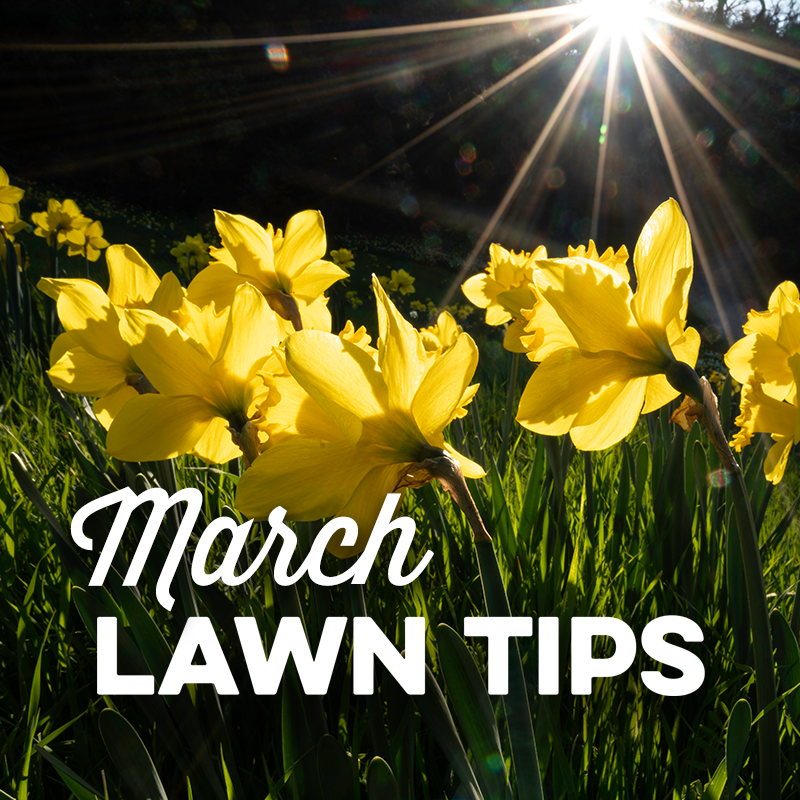 March Lawn Tips 2021