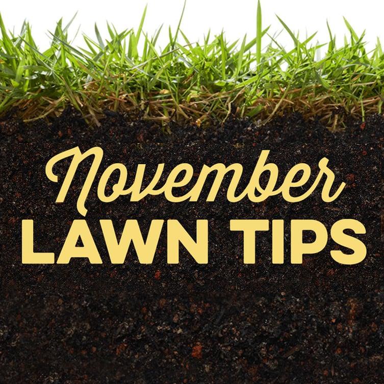 November Lawn Tips 2019