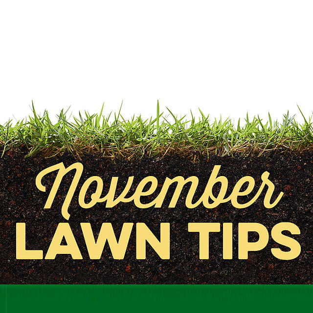 November Lawn Tips 2019 - featured image