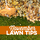 November Lawn Tips 2020 - featured image