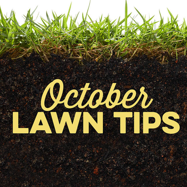 October Lawn Tips 2019 - featured image