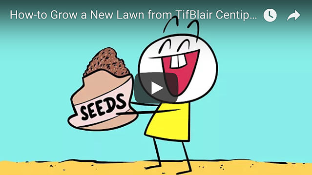 Key Steps to Remember When Seeding a Lawn (Video) - featured image
