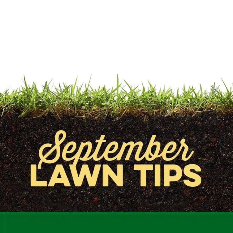 September Lawn Tips 2019