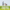 September Lawn Tips 2020 - featured image