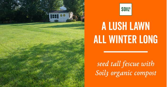 seed tall fescue with compost house