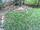 Is Your Yard Too Shady For Grass? - featured image