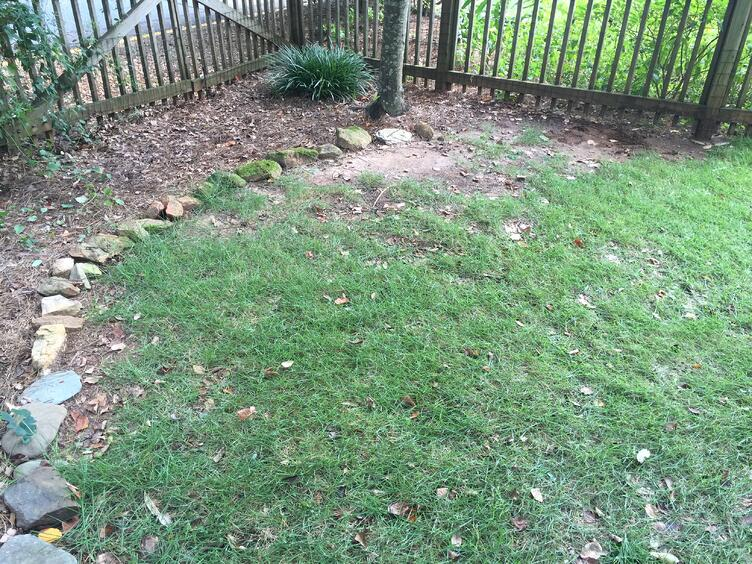 Is Your Yard Too Shady For Grass?