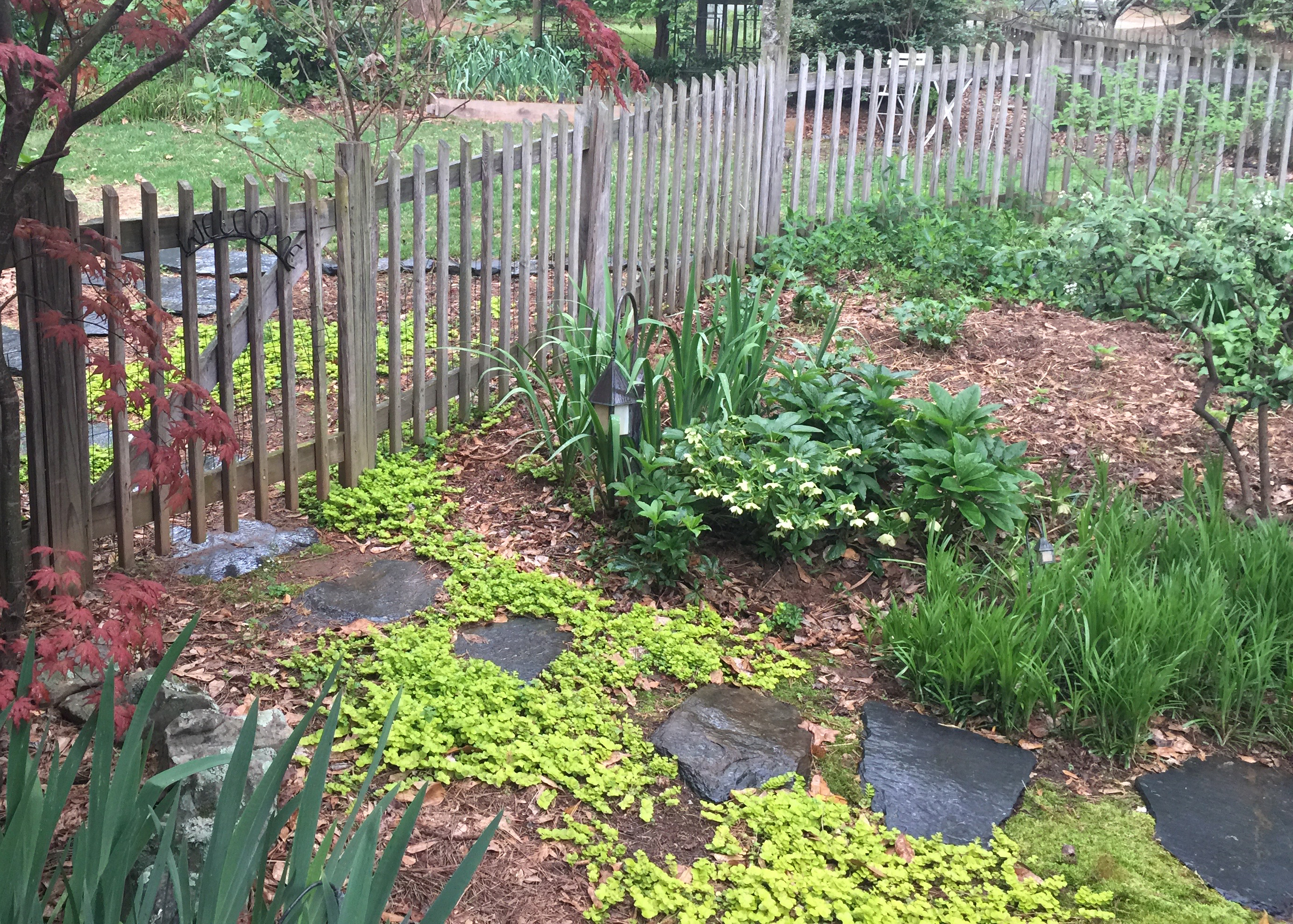 lawn and shade use ground covers instead