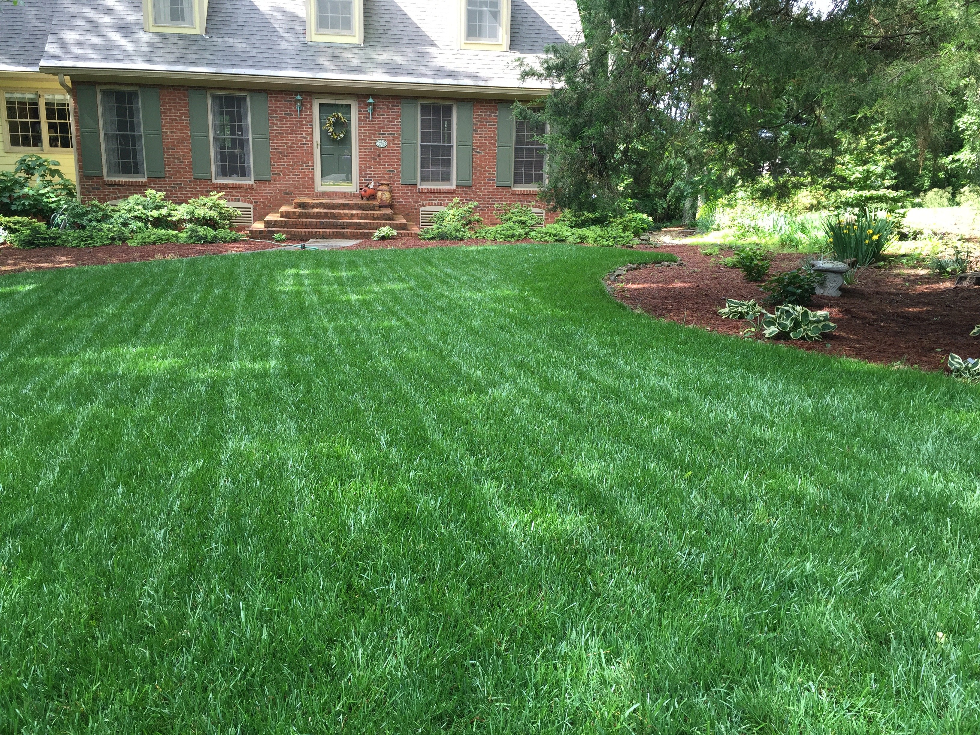Is Your Yard Too Shady For Grass