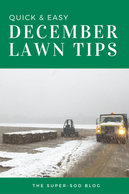 December Lawn Tips.png