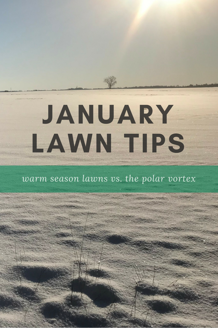 January Lawn Tips.png