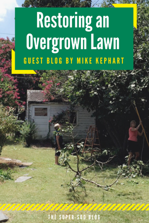 Restoring Overgrown Lawn.png