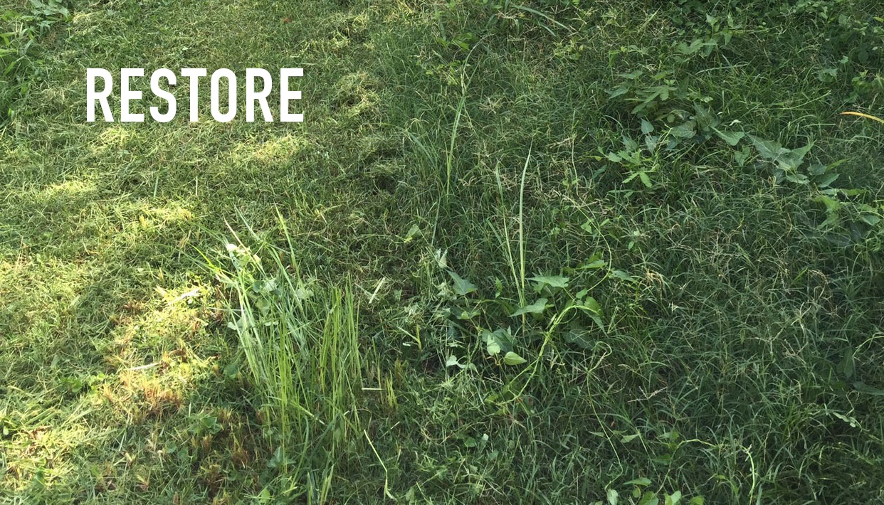restore overgrown lawn.jpg