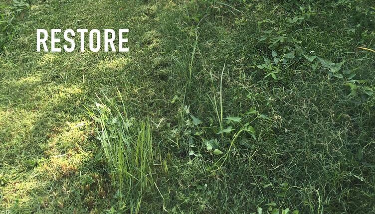 That Apple Fell Straight Down: Advice to Restore an Overgrown Lawn