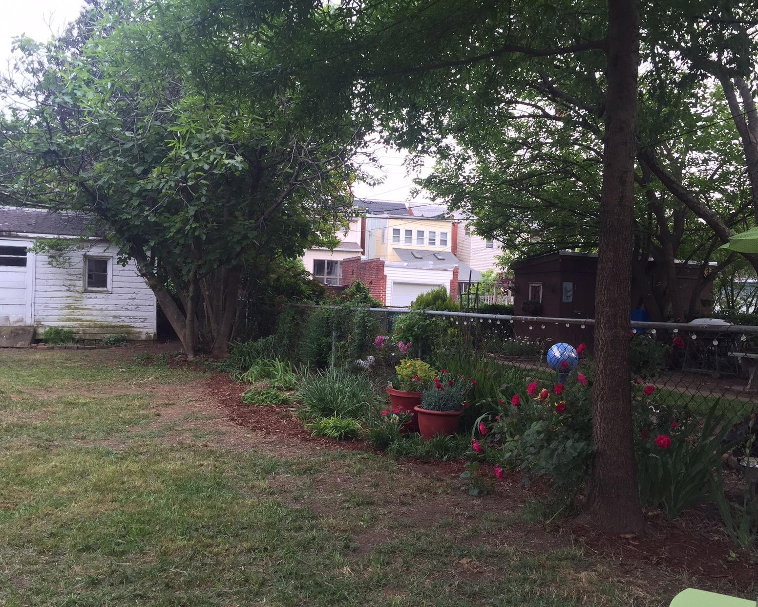 saving perennials in lawn restoration.jpg