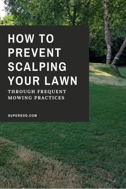 PREVENT LAWN SCALPING with frequent mowing.png