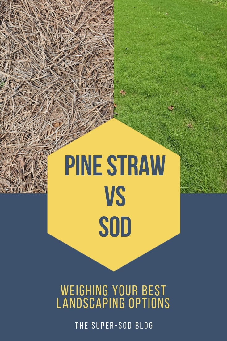Pine Straw vs sod